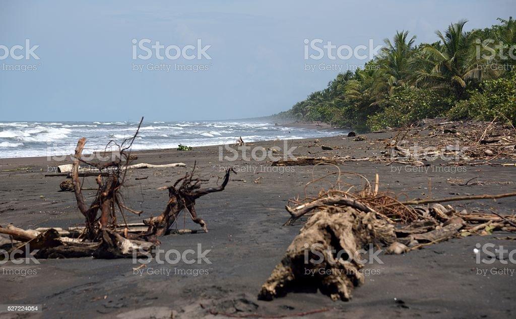 Playa de Tortuguero stock photo