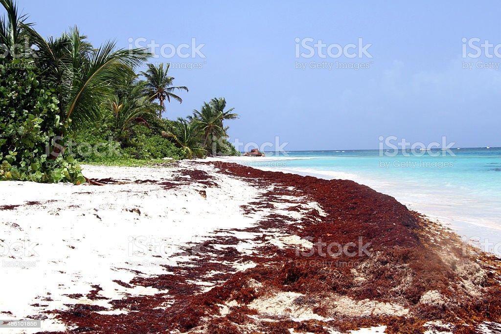 Playa flamingo zbiór zdjęć royalty-free