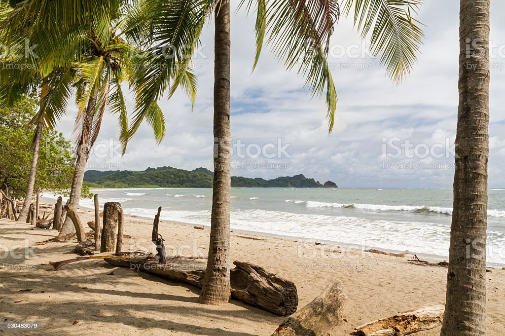 Playa Garza Palm and Driftwood Fence stock photo