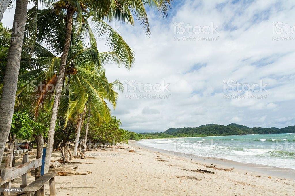 Playa Garza Palm Trees stock photo