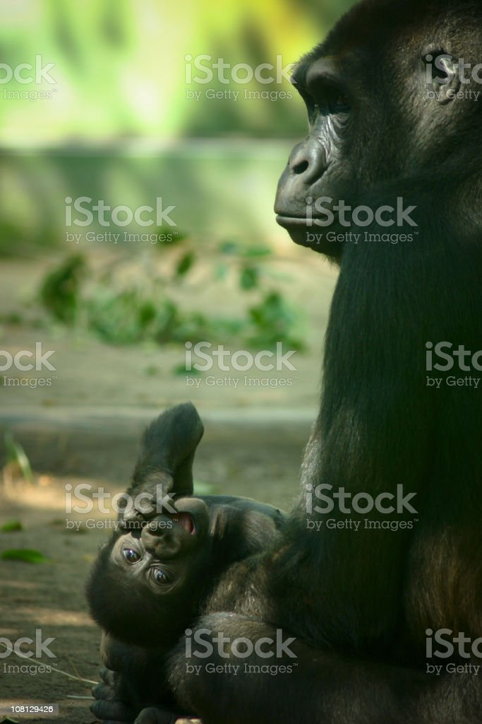 Playful Baby royalty-free stock photo