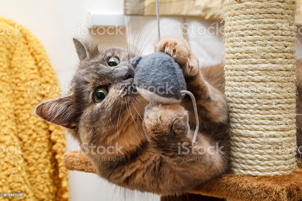 Playful cat stock photo