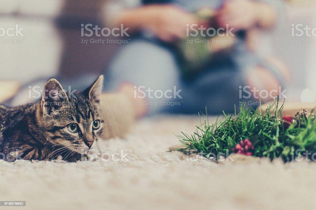 Playful cat stock photo