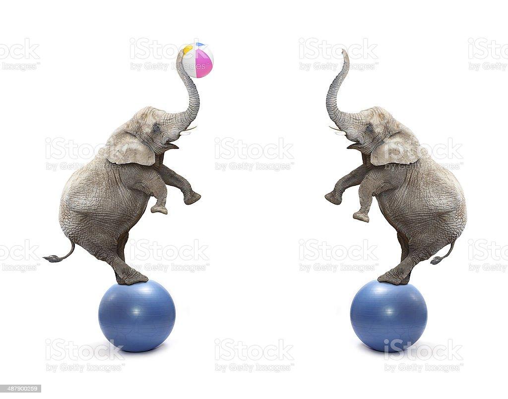 Playful elephants. stock photo