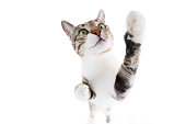 Playful funny cat close-up