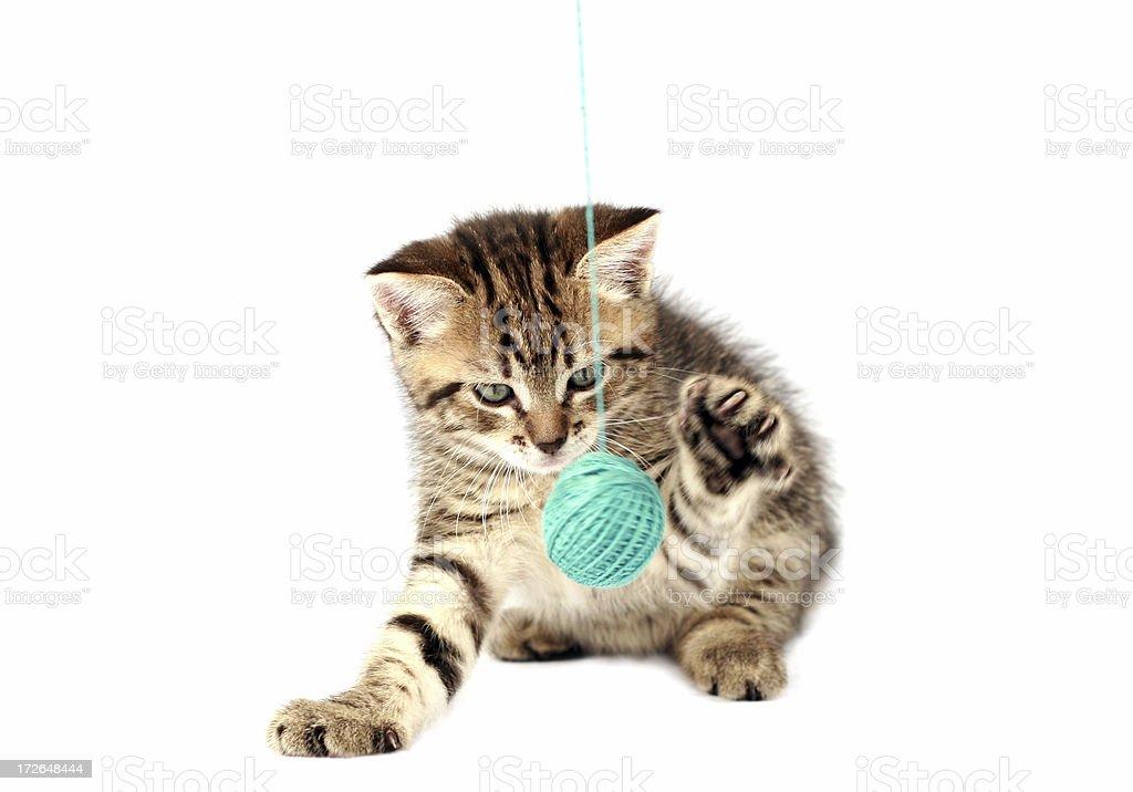 Playful kitten royalty-free stock photo
