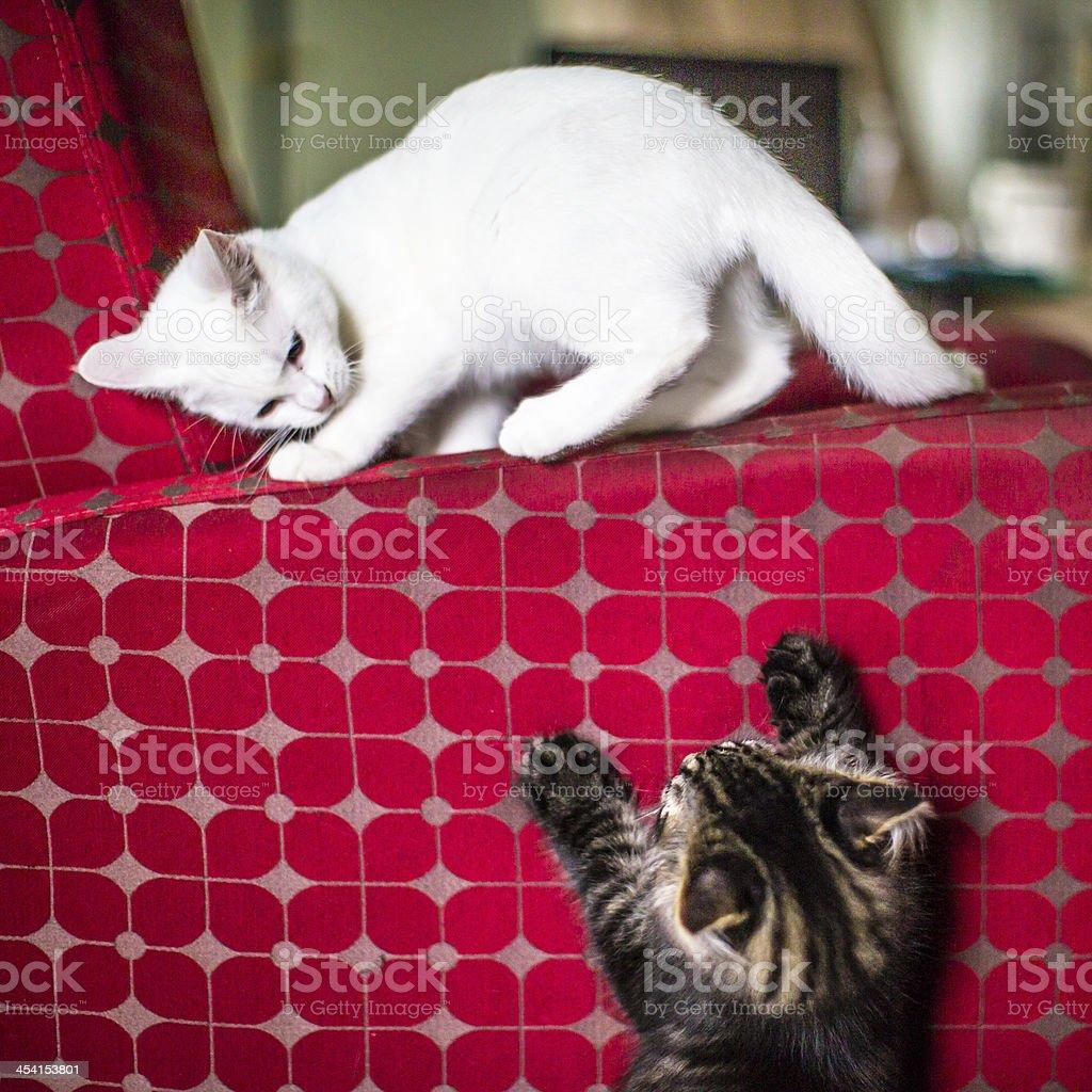 Playful Kitties stock photo