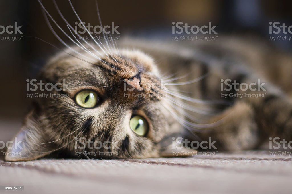 Playful kitty Cat stock photo