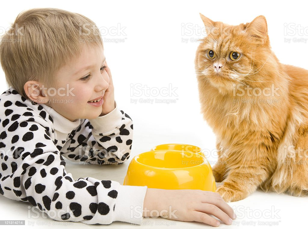 Playful little boy and serious red cat .XXXL royalty-free stock photo