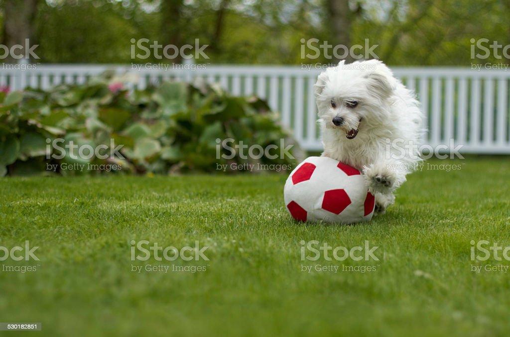 Playful pup stock photo