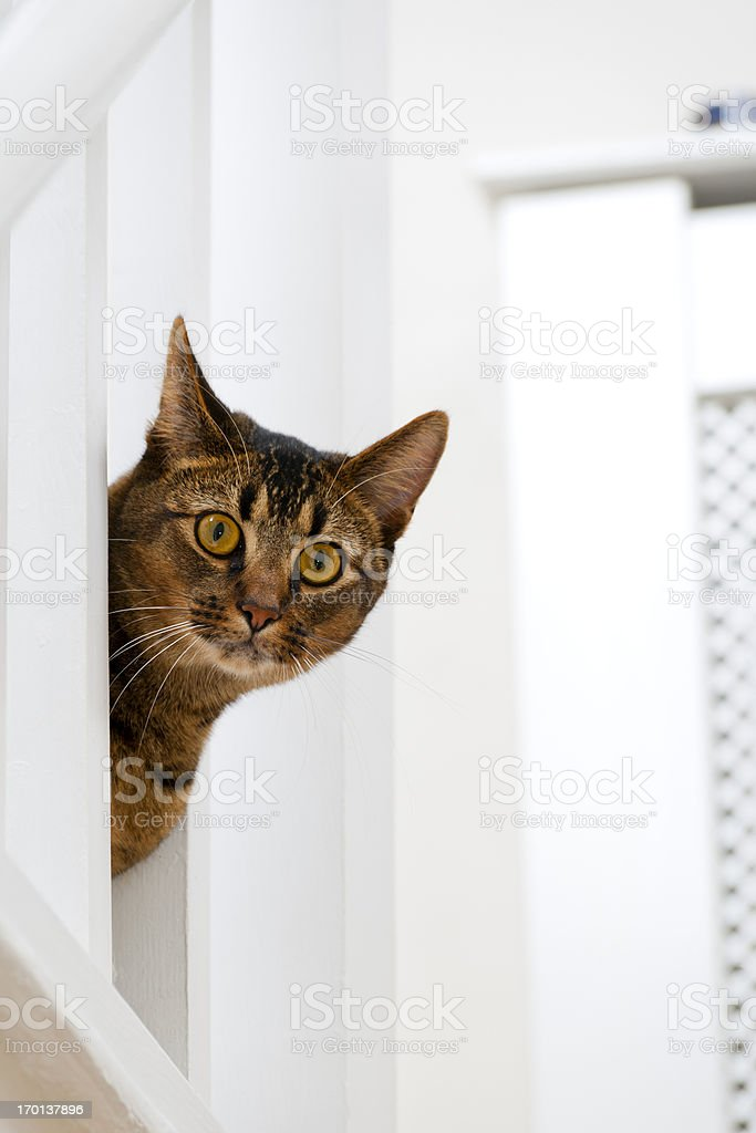 Playful young cat stock photo