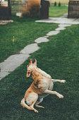 Playfull dog