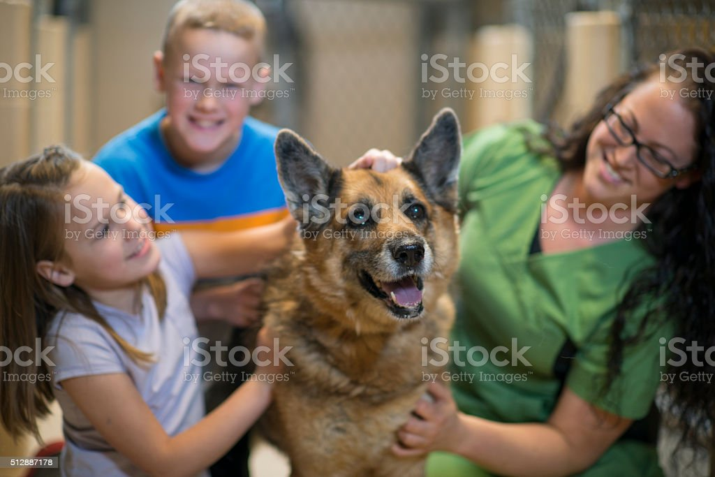 Playfully Petting a Dog stock photo