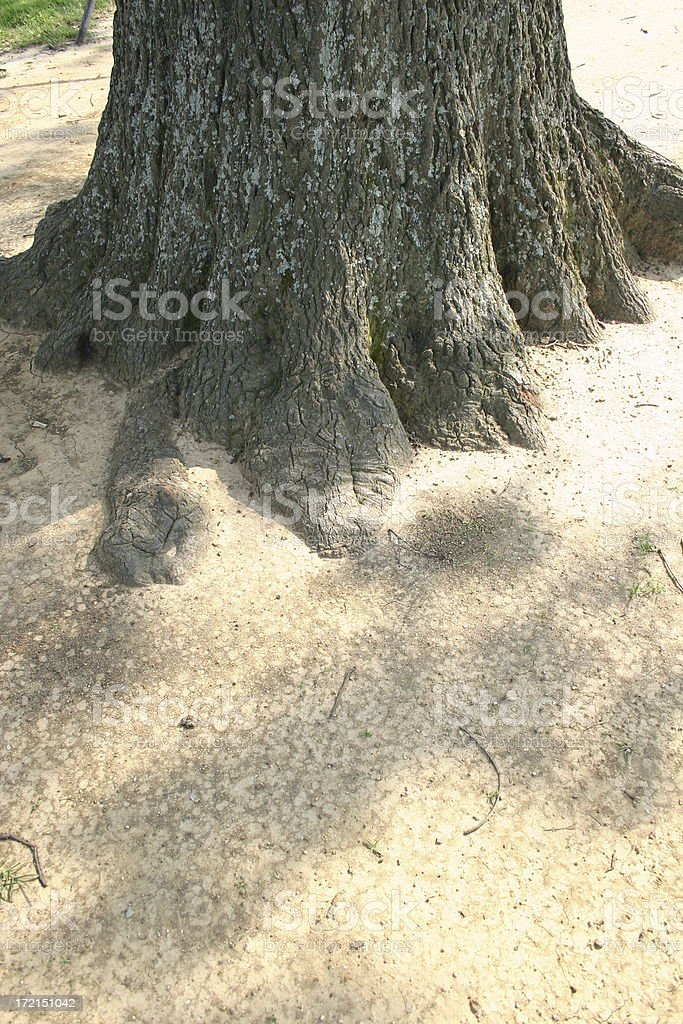 Playground Tree stock photo