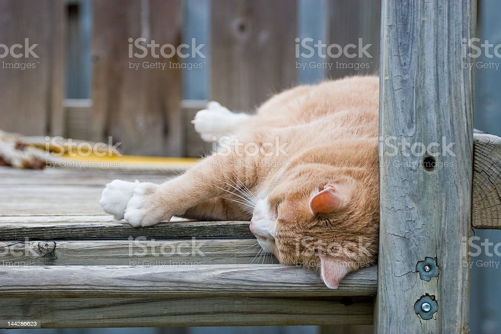Playing Cat royalty-free stock photo
