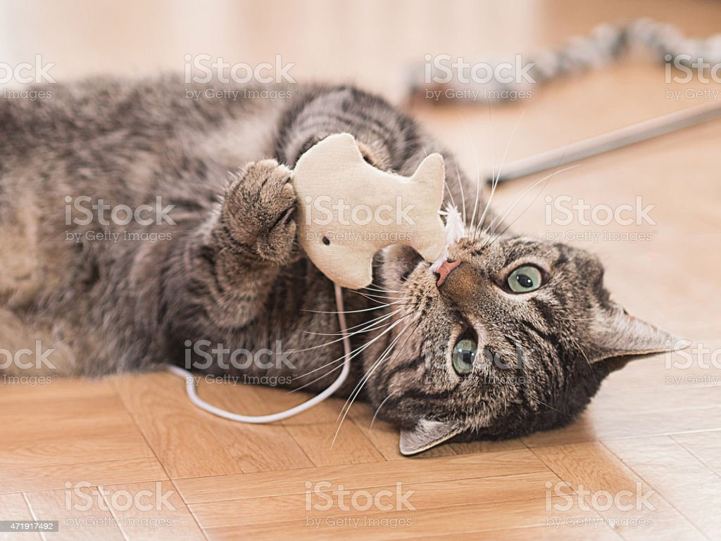 Spielende Katze stock photo
