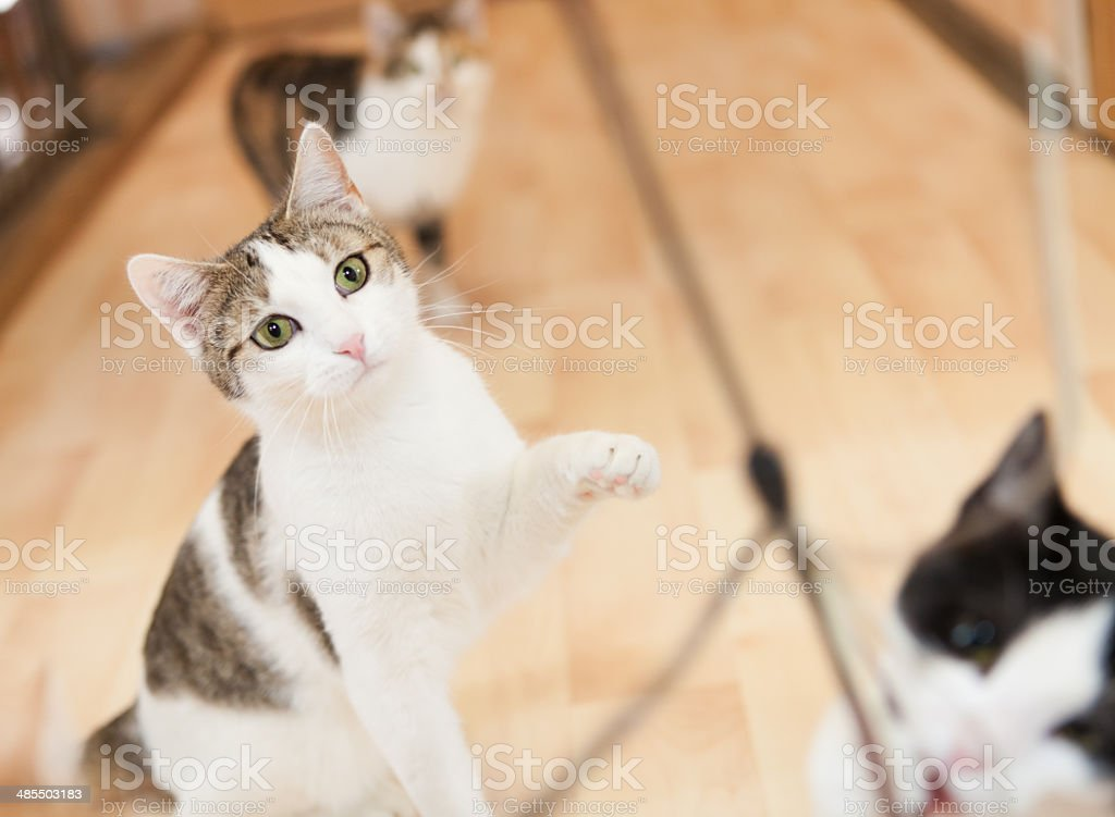 playing cats royalty-free stock photo