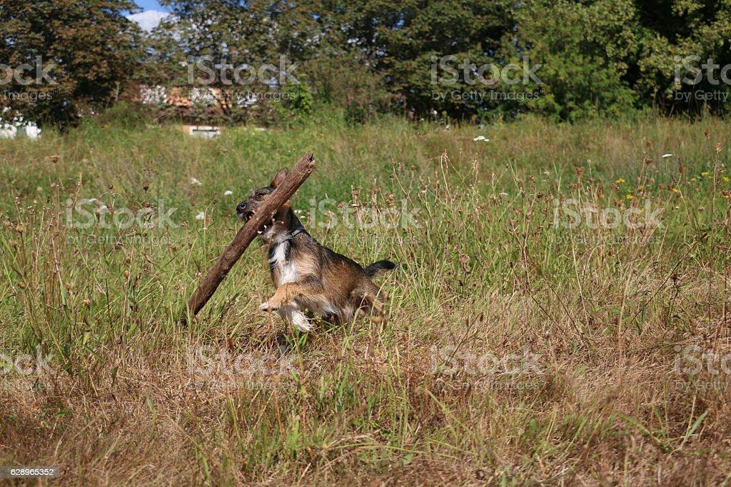 playing dog stock photo