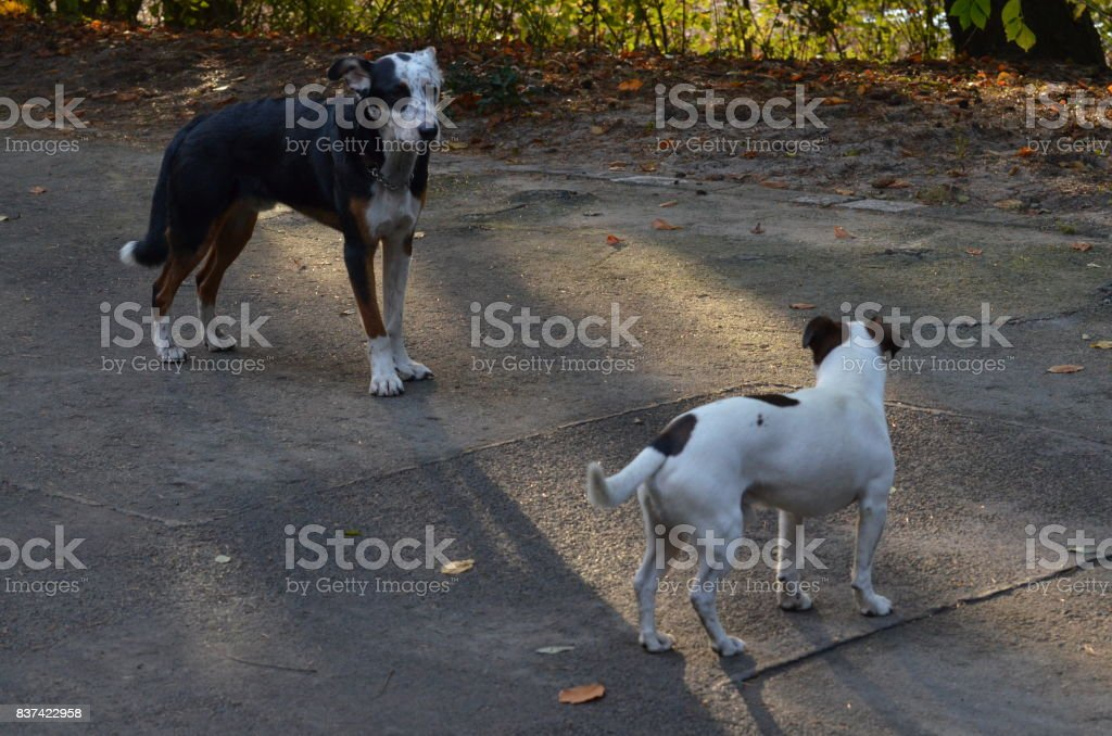 Playing dogs in Berlin stock photo