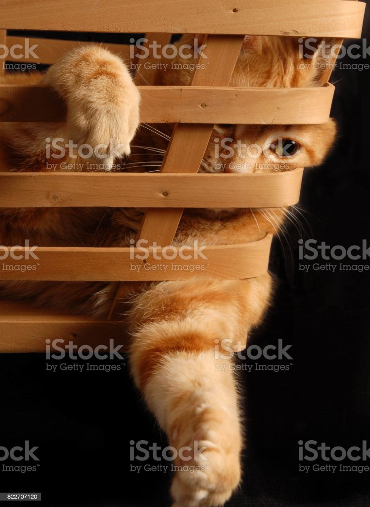 Playing in a Basket stock photo