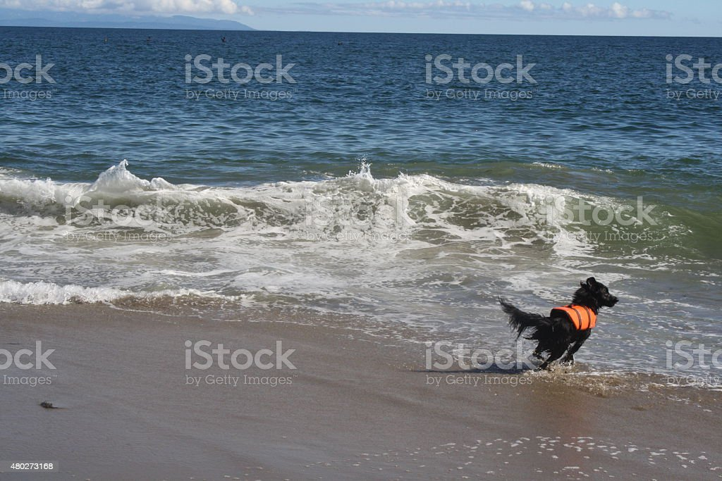Playing in the Waves stock photo