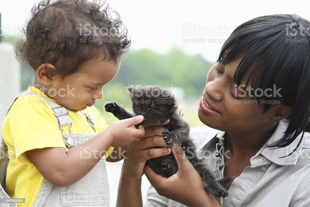 Playing with a kitten royalty-free stock photo