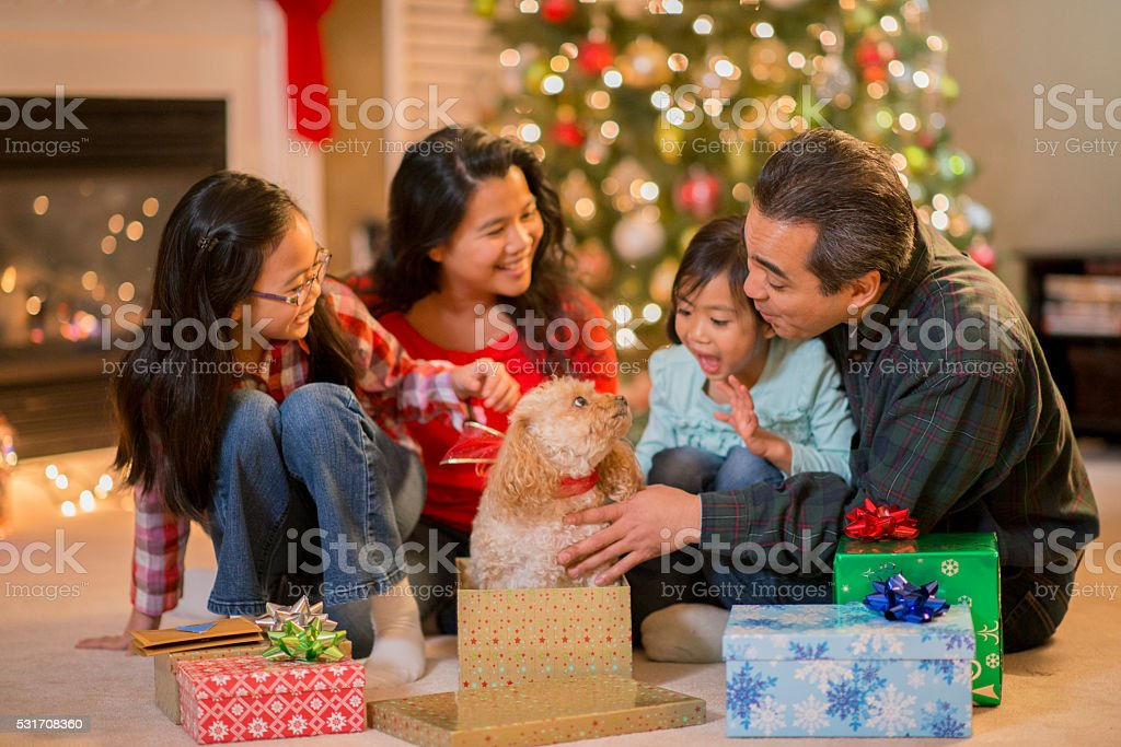 Playing with a New Christmas Puppy stock photo