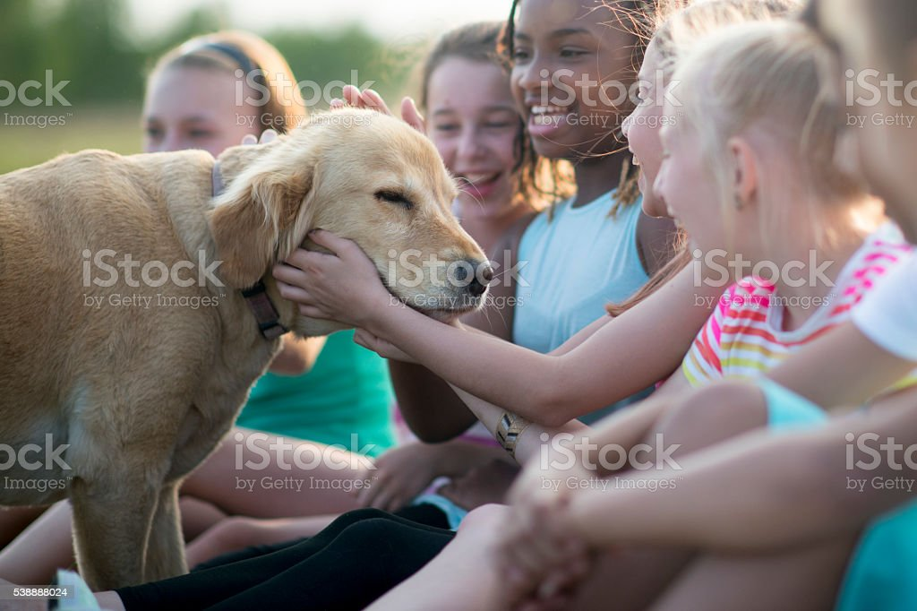 Playing with a Puppy stock photo