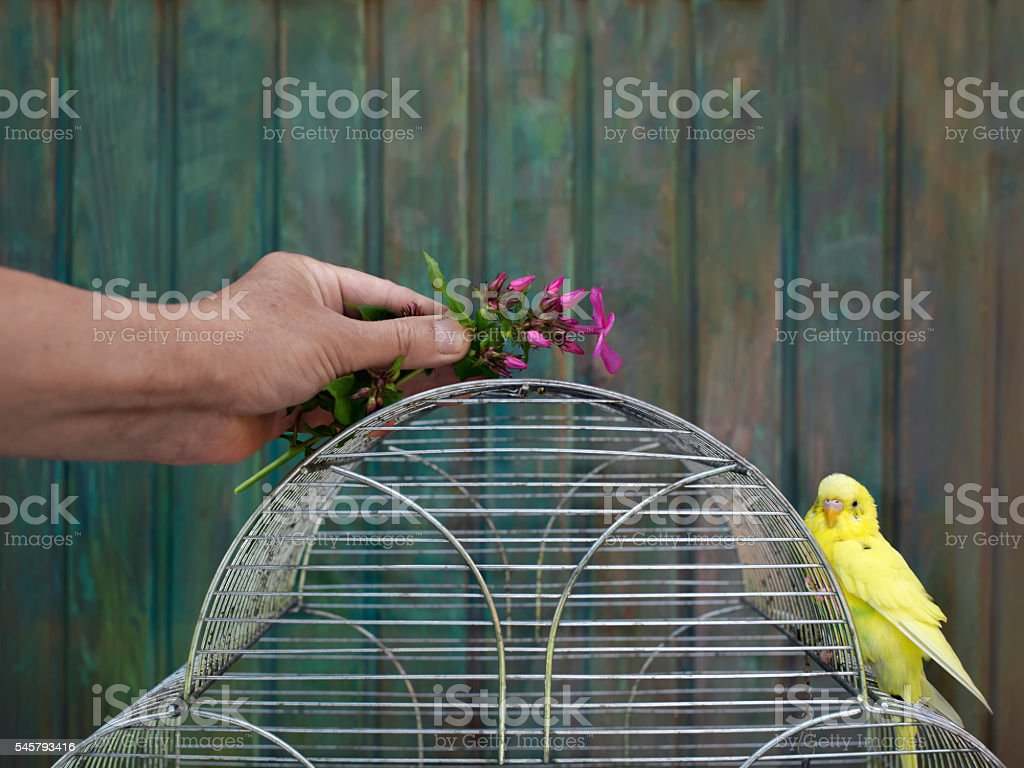 Playing With Parrot stock photo