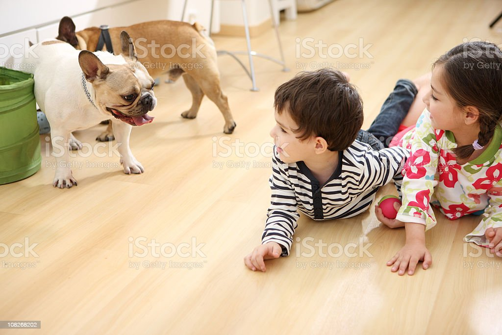 Playing with pets royalty-free stock photo