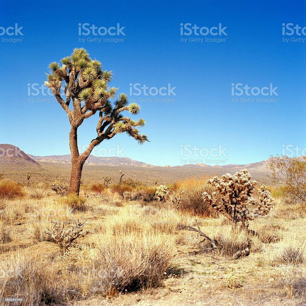 'Pleasant Valley, California' stock photo