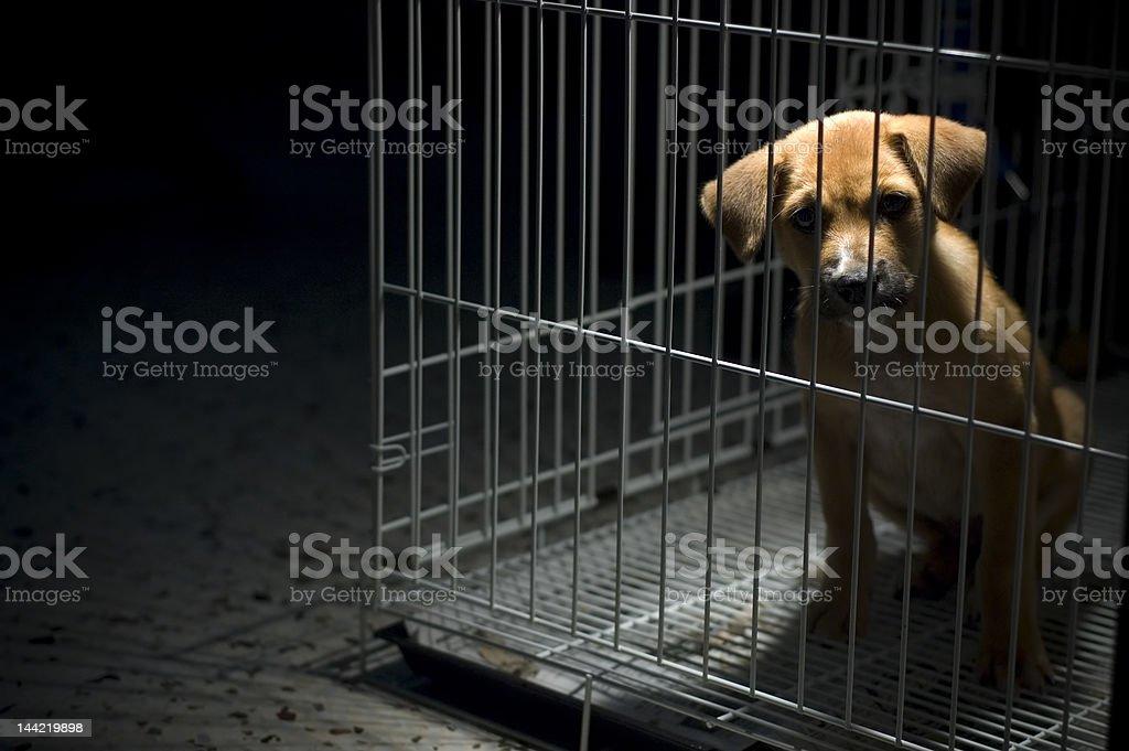 Please Free Me! stock photo