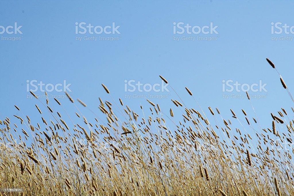 plentiful harvest royalty-free stock photo