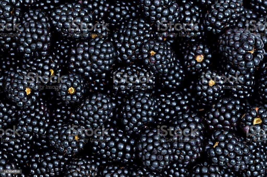 plenty of fresh blackberries royalty-free stock photo