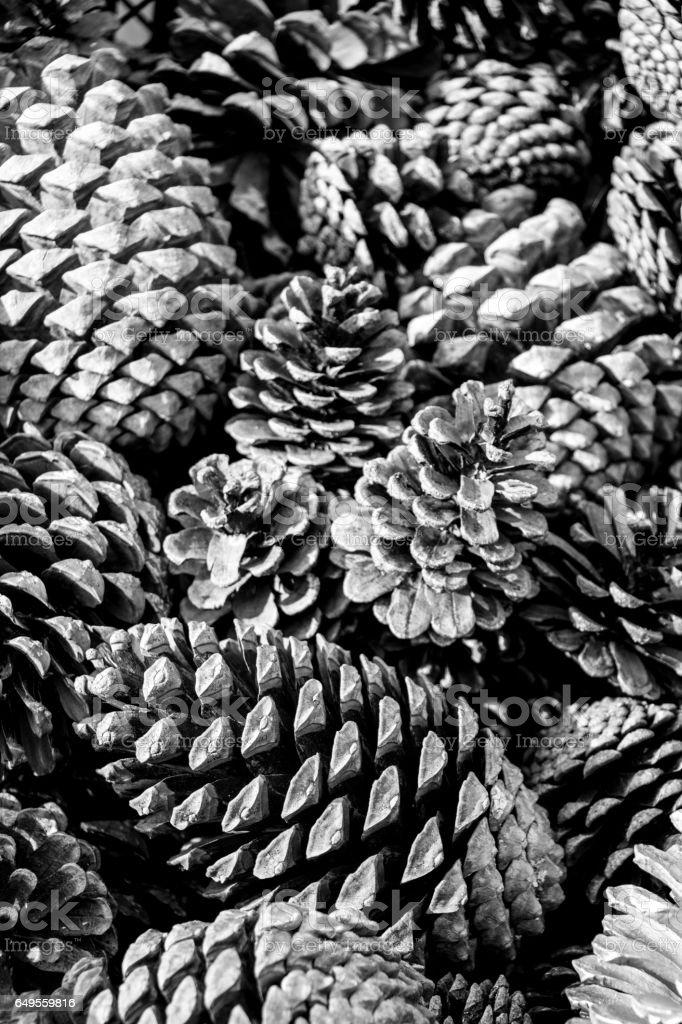 Plenty of Pine cones stock photo