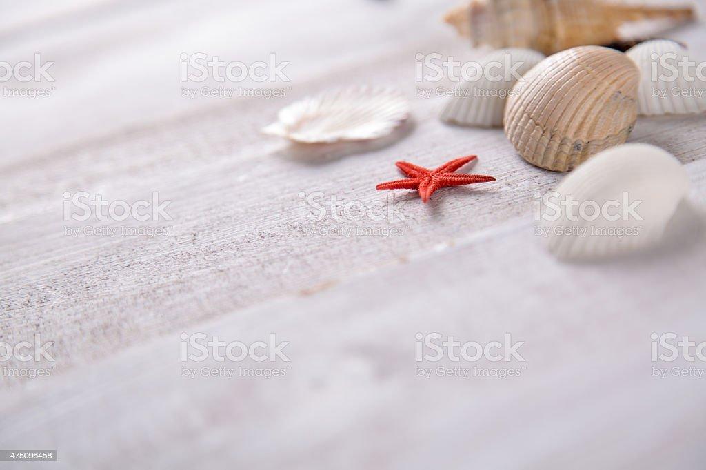 Plenty of stones and shells on the beach stock photo