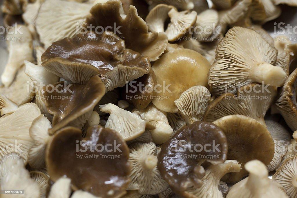Pleurotus eryngii royalty-free stock photo