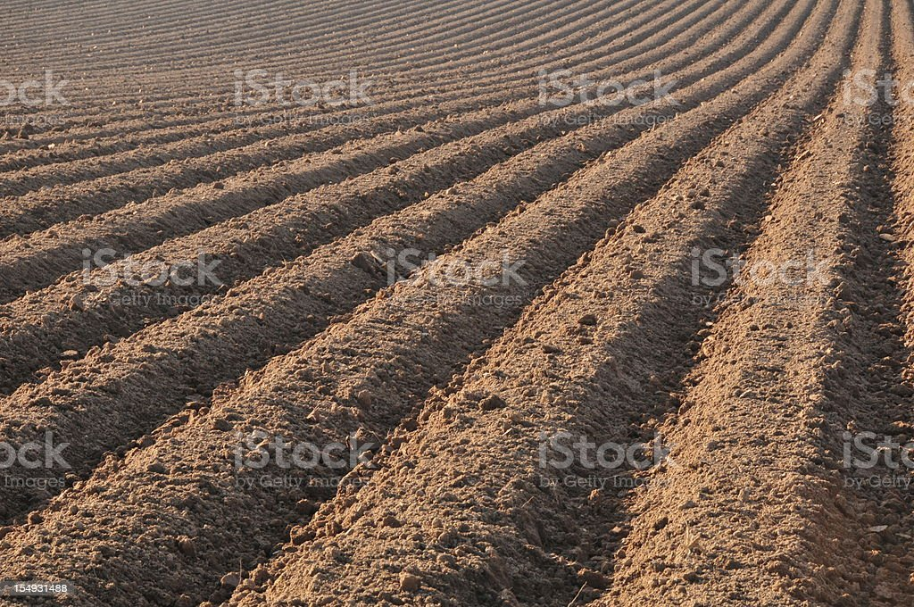 Ploughed field,Jersey. stock photo