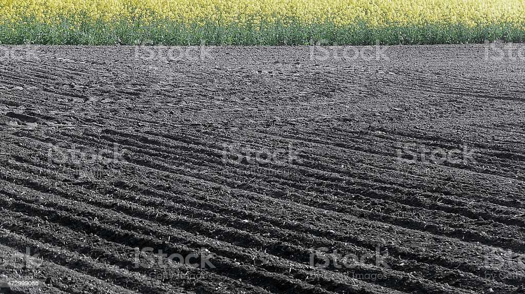 Ploughed soil stock photo