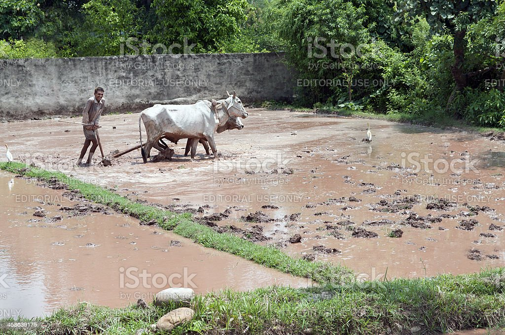 Ploughing Field in India royalty-free stock photo