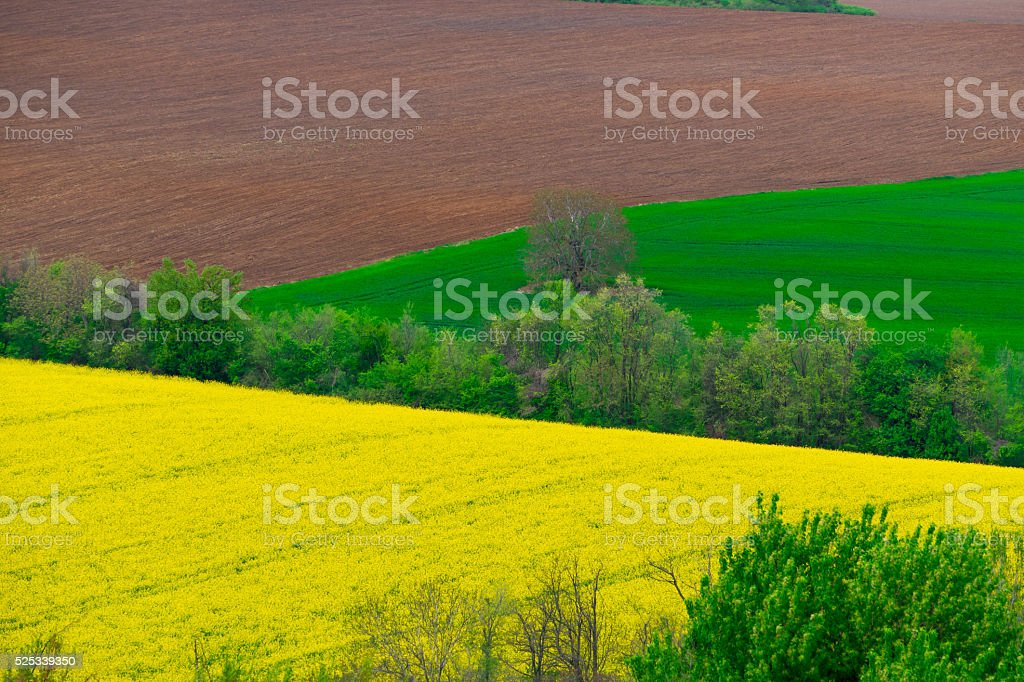 Plowed and sown farm field stock photo