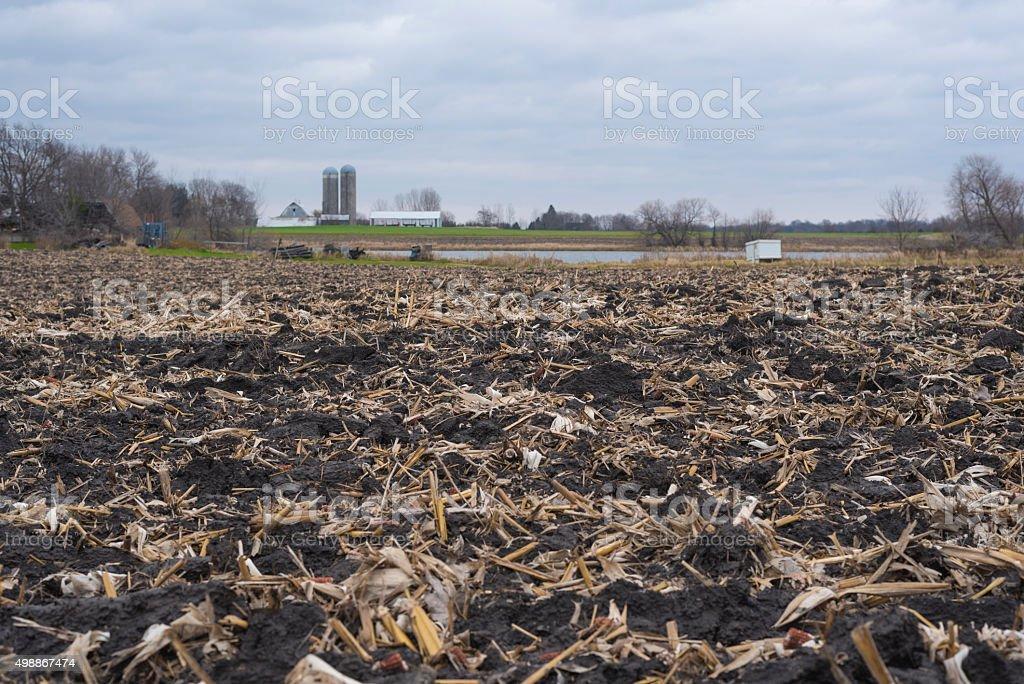 Plowed cornfield before winter stock photo
