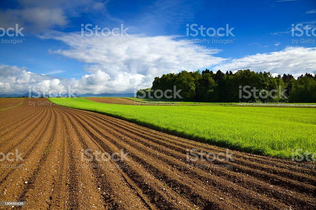Plowed farm field royalty-free stock photo