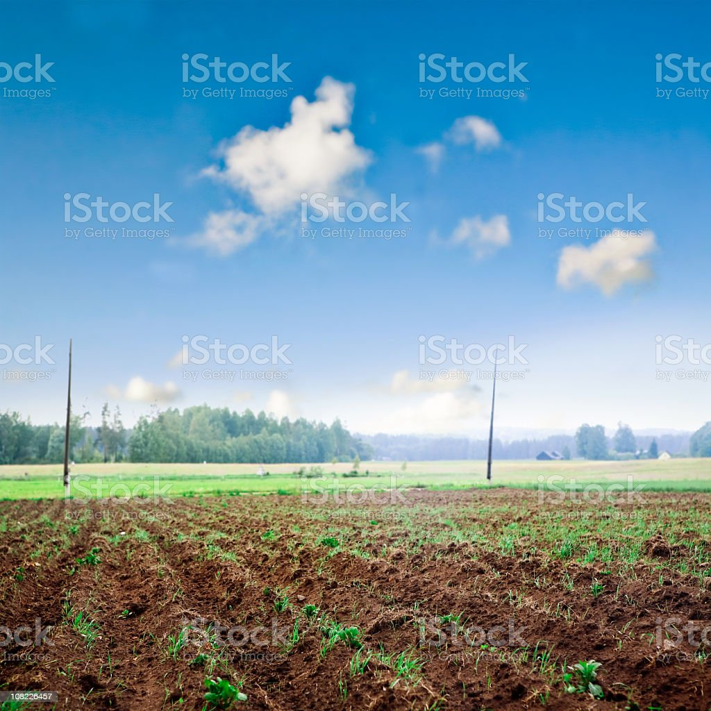 Plowed Farm Field with Growing Plants royalty-free stock photo