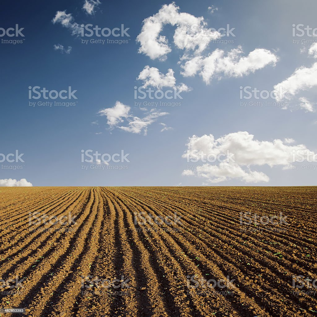 plowed field and blue sky royalty-free stock photo