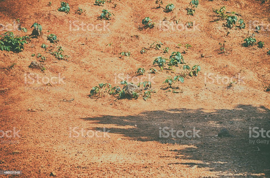 Plowed field and forest mixed forest in a misty day stock photo
