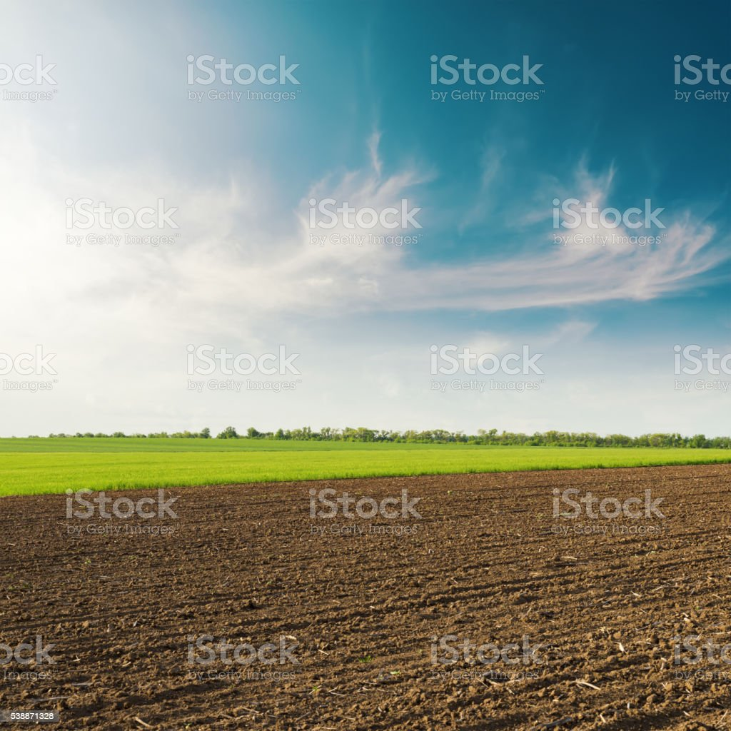 plowed field and spring clouds in blue sky on sunset stock photo