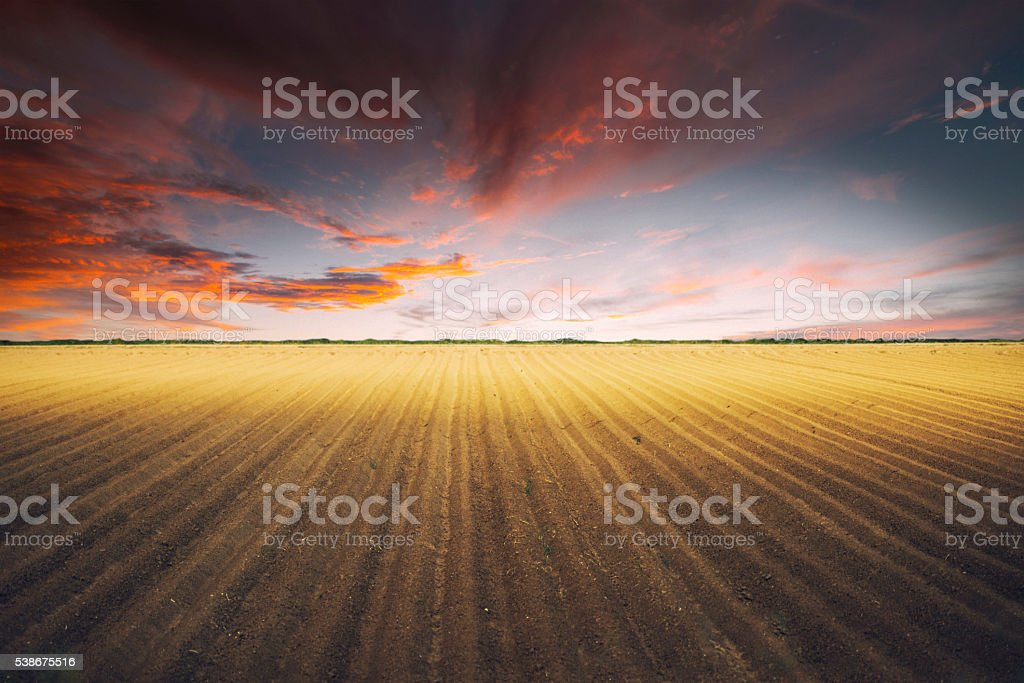 Plowed field at sunset stock photo