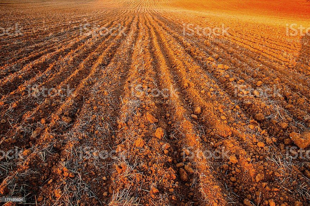 plowed field crops stock photo