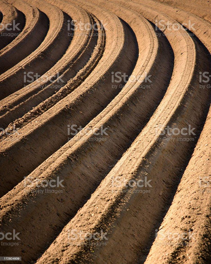 Plowed Field royalty-free stock photo